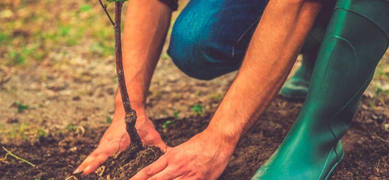 Най-добрите градинари са мъже